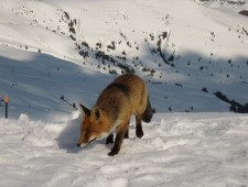 Fox 'n' Rabbits
